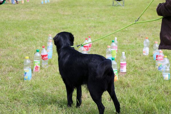 was muss ich wohl mit diesen vielen PET-Flaschen machen...