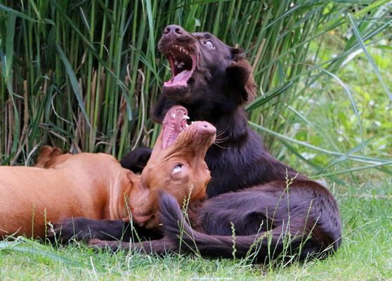 Ferienhund Bala mit Jack - auch die beiden haben sich super verstanden