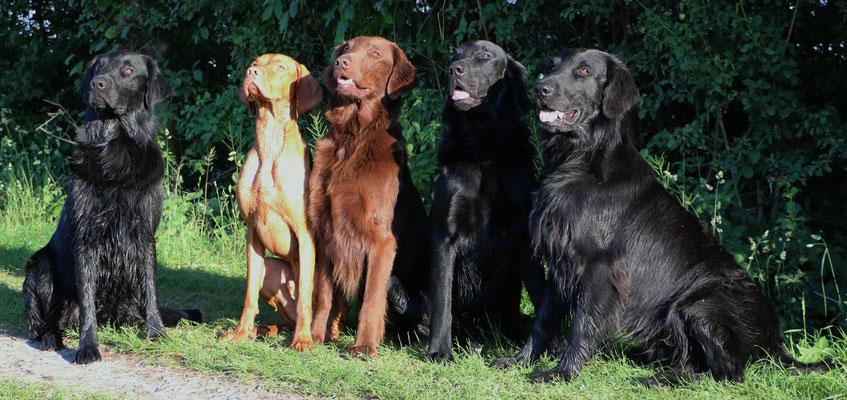 Meo, Bala, Ennio, Chaplin und Inox