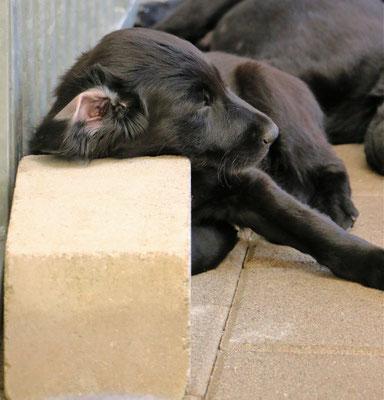 Ja, die Schlafpositionen der Flats sind und bleiben ganz besonders :-)