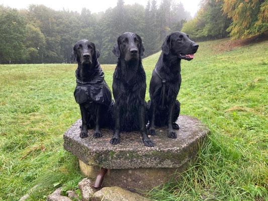 Meo mit seinen Söhnen Scius und Ajari