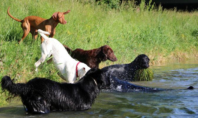bei so viel Spass waren plötzlich noch mehr Hunde dabei