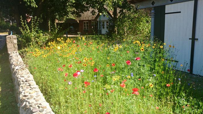 Blumenwiese am Eingang zum Radschuppen
