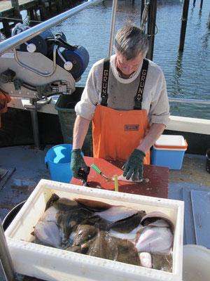 Kutterfischer mit Ostseescholle