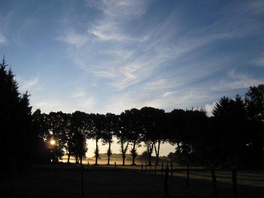 Morgendämmerung hinter der Lindenallee
