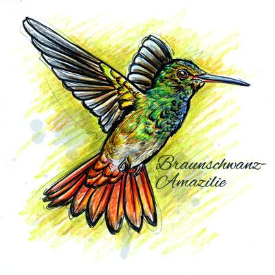 Kolibri | Original-Farben