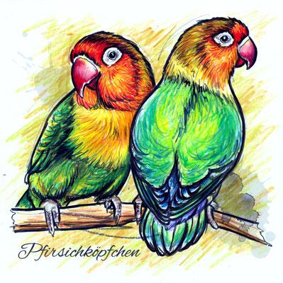 Papagei | Original-Farben