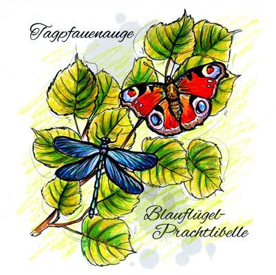 Schmetterlinge | Original-Farben