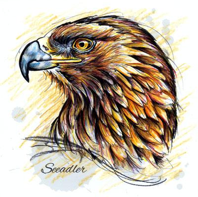 Seeadler | Original-Farben