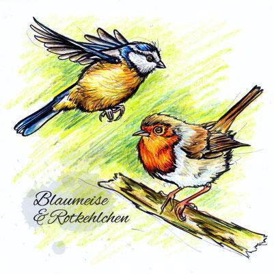 Blaumeise & Rotkehlchen | Original-Farben