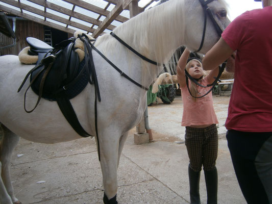 Pferd auftrensen