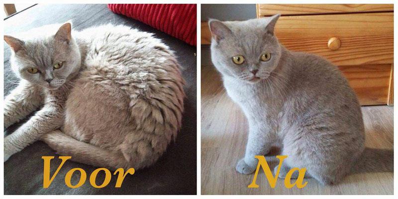 Kat trimmen voor - na voorbeeld 7