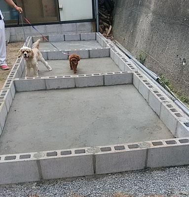 犬舎大吉モデル