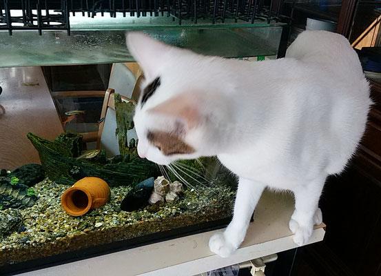 サンゴ興味深々!