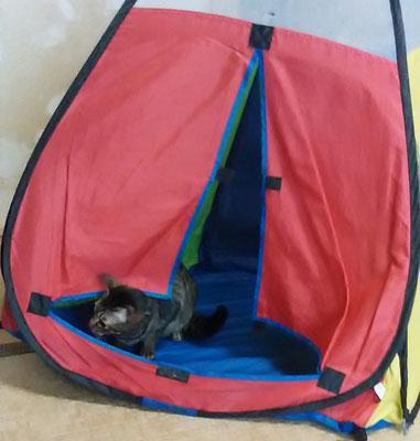 にゃんじろうテント見つける