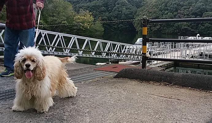 大吉、橋を渡って一安心。