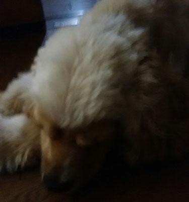 大吉!よく寝ています。
