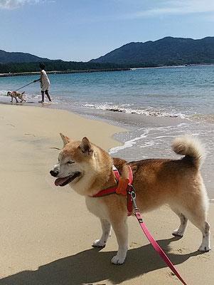 ももちゃん海へ行く!