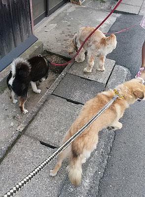 並んで散歩!