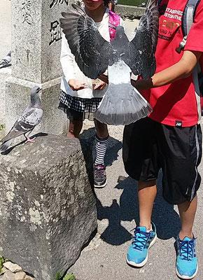萩城城跡のハト