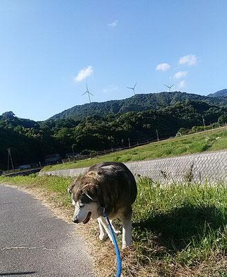 はなこちゃん散歩中!