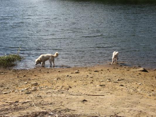 聖湖 湖畔の写真