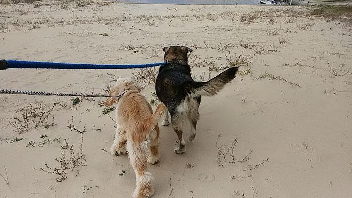 砂浜を2匹で!