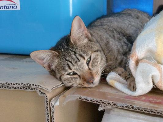 棚の上で寝ている猫の写真