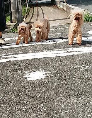 横断歩道を渡っています