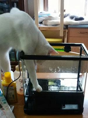 サンゴ君水を飲む!