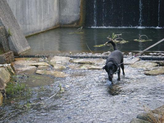 堰堤の手前のハナコの写真