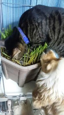 猫草にゃん&大吉