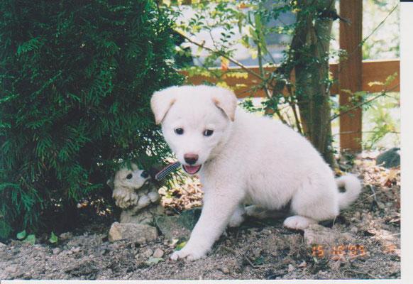 子犬のチョチョの写真