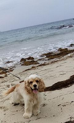 海は楽しいな!