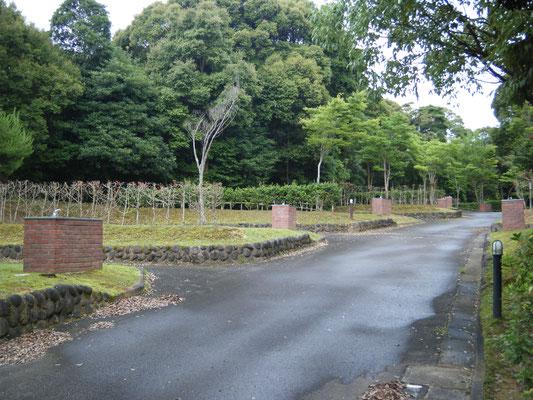 豊田湖畔キャンプ場 水道付きサイトの写真