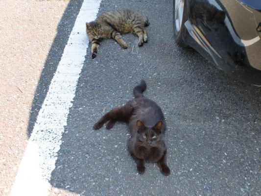 駐車場の猫 2匹の写真