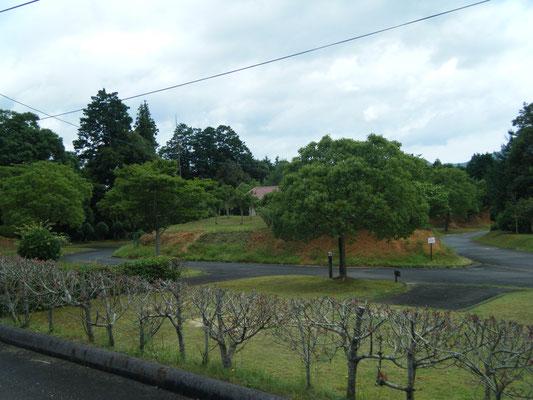 豊田湖畔キャンプ場 キャンプサイトの写真