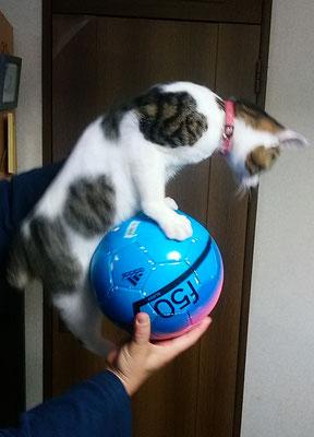 もう少しでボールに乗れる!!