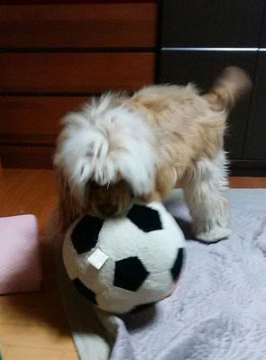 僕のサッカーボール!