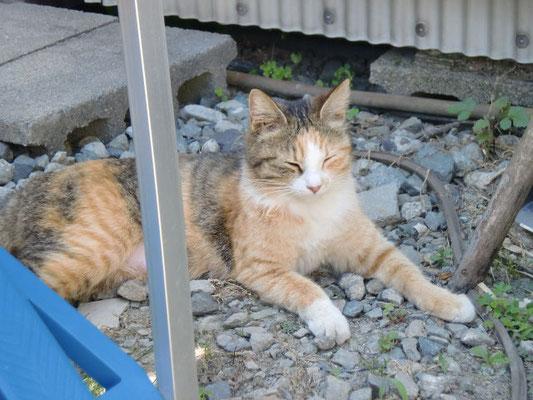 バラスの上で寝ている猫の写真