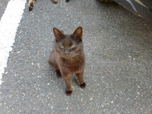 駐車場の見つめる猫の写真