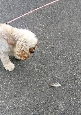 大吉、羽を見つける!