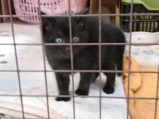 里親募集 黒子猫の写真