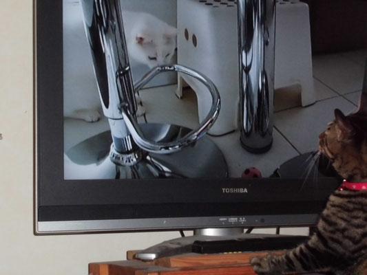ララテレビを見る!