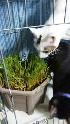 猫草サンゴ&にゃん