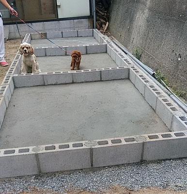犬舎プーちゃんモデル