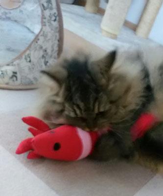 ジュリアン君、えびのおもちゃに夢中!