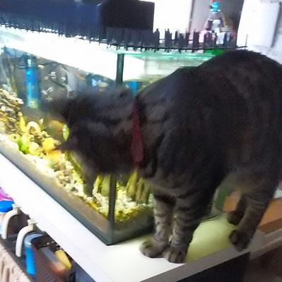 魚だ!ララ