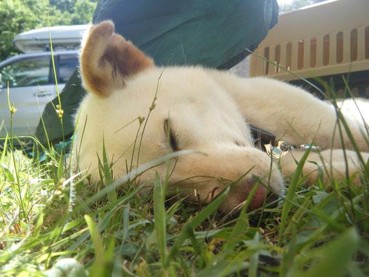 寝ているチョチョの写真