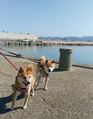 海の散歩でハイポーズ!